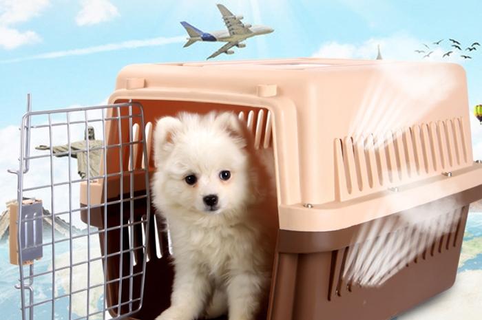 Động vật cảnh được vận chuyển trên khoang hành khách