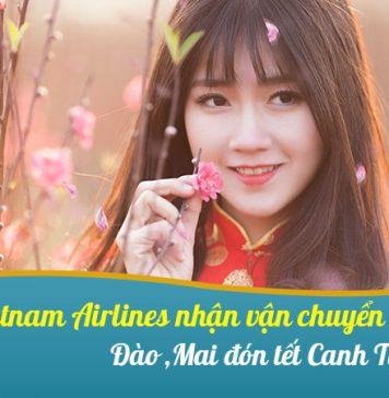 Vietnam Airlines vận chuyển Đào Mai đón Tết 2020 từ ngày 09/01/2020